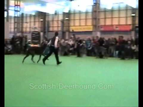Crufts 2008 Deerhound Dog Final Video