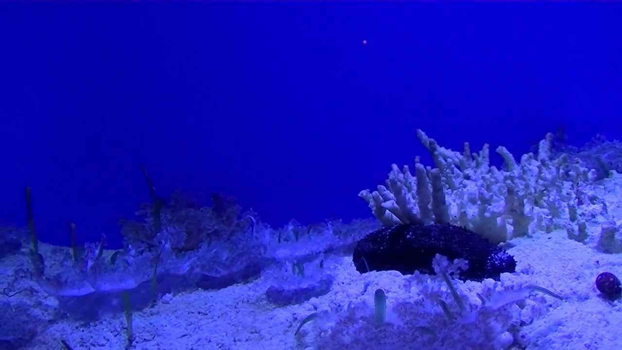 Upside down jellyfish aquarium