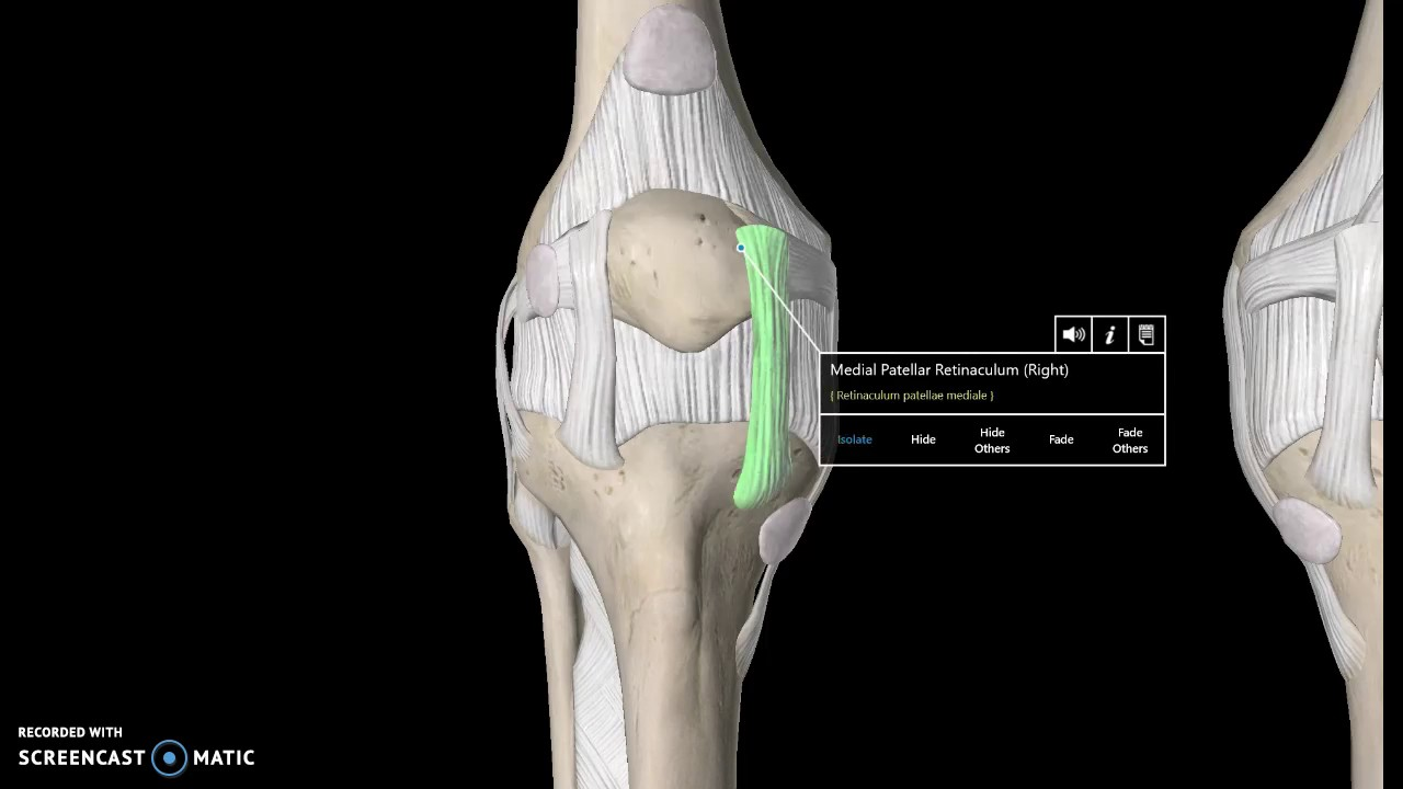 Knee Anatomy Tutorial (Ligaments) - YouTube