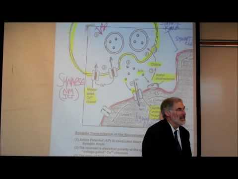PHYSIOLOGY; THE NEUROMUSCULAR JUNCTION by Professor Fink