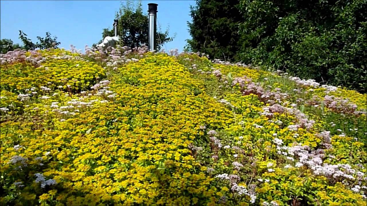 Sedum Roof In Summer Youtube