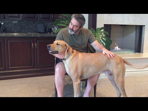 Why To Get A Rhodesian Ridgeback