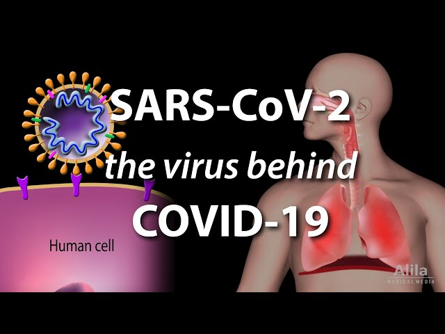Understanding the Virus that Causes COVID-19, Animation