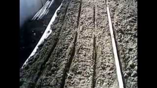 Посадка зеленого лука из семян Грин Баннер в теплице.