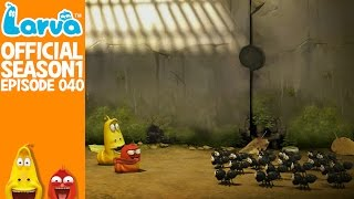official ant - larva season 1 episode 40
