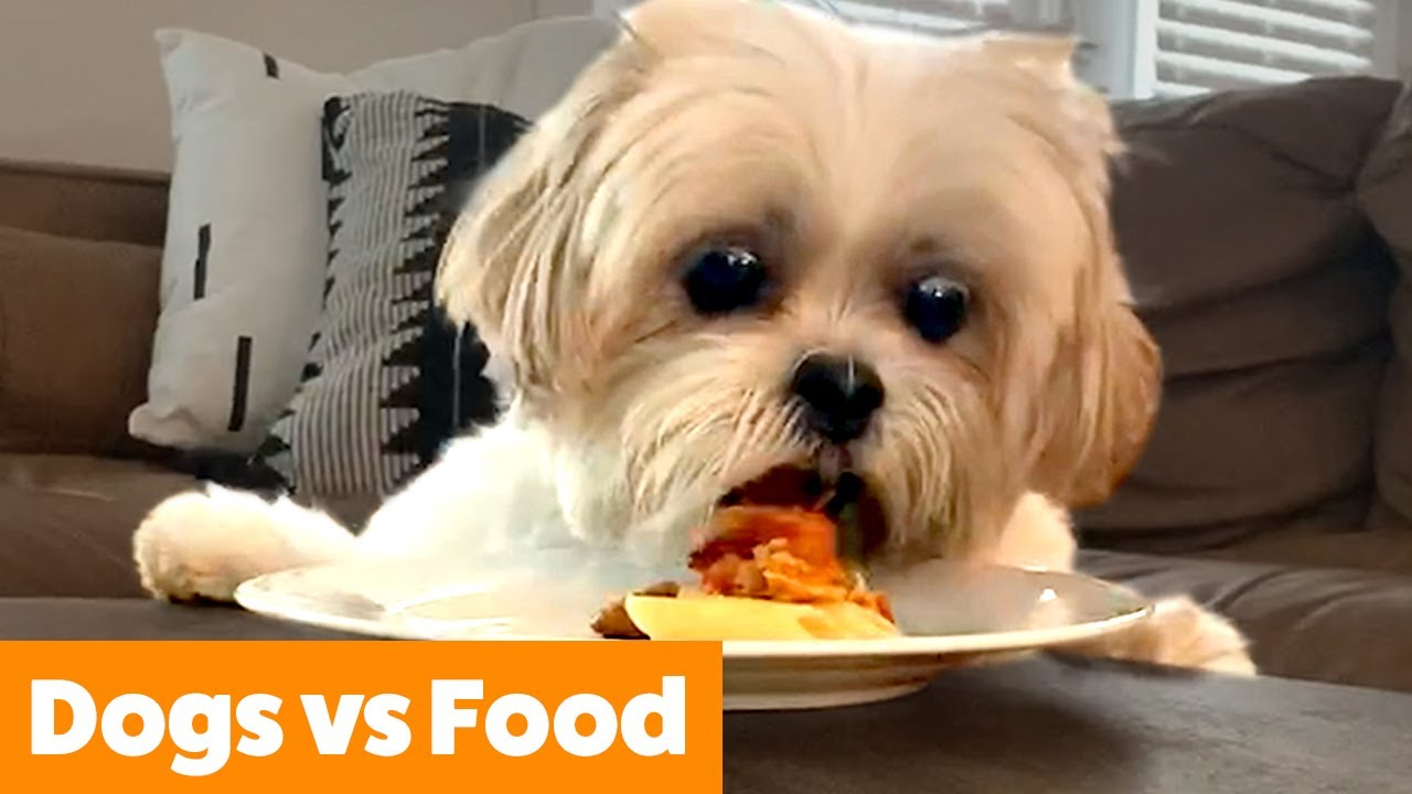 Dogs vs Food - Dog Reactions & Bloopers | Funny Pet Videos