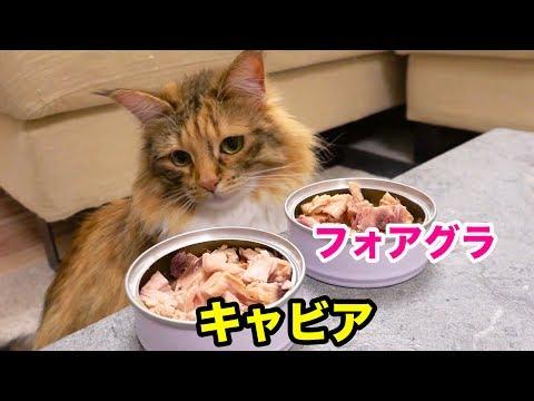 猫に三大珍味をあげたら何に食いつく!?