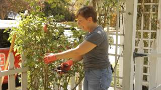 How to Prune Back Roses : Garden Space
