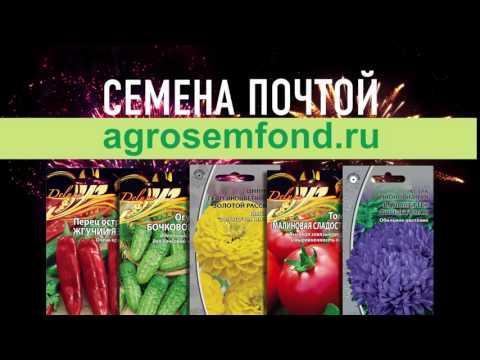 Семена АГРО 10 секунд