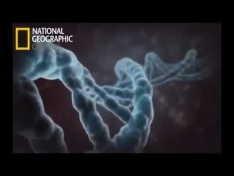 ¿Qué es la Epi- genética?