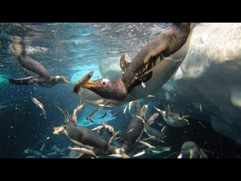 Penguin's Environmental Enrichment