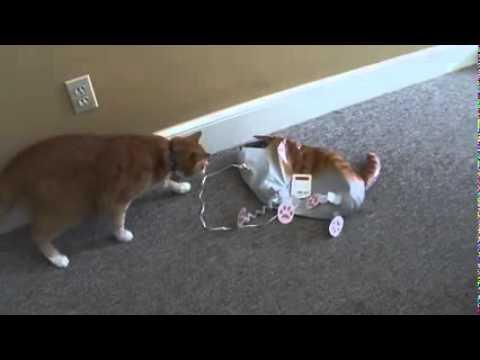 Lucu Ngerjain Anjing Dog Prank Funnydog Tv