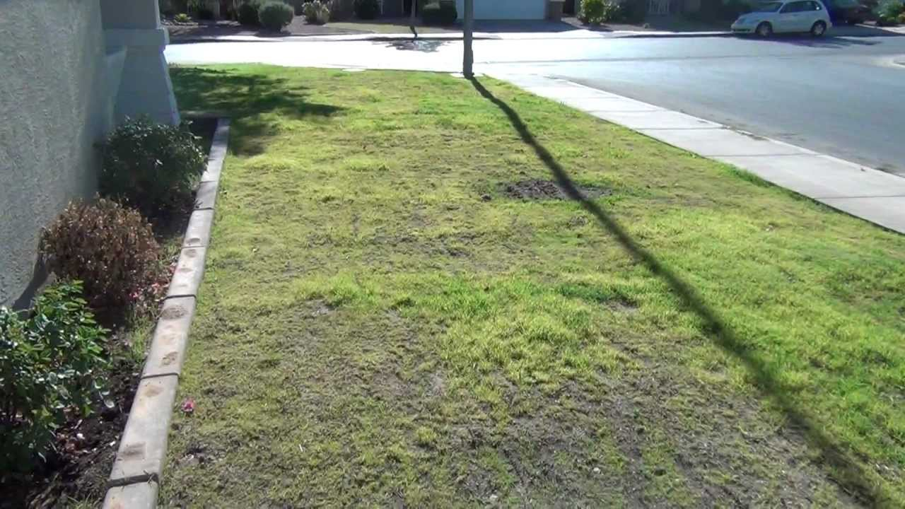 How To Plant Bermuda Grass 5 Weeks After Planting Youtube