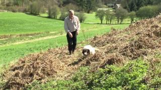Springer Spaniel Gundog Stud Pantfarm Liffey -- 'murphy'
