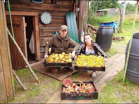 Вопрос: Куда сдавать грибы и ягоды в Архангельске и области Какие цены?