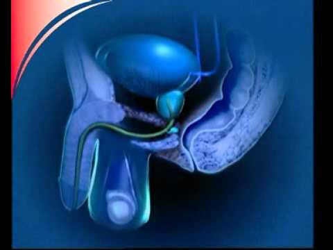 Was ist die Prostata? - YouTube