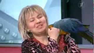 Дешево и сердито  Выбираем попугая 06 02 2013 1