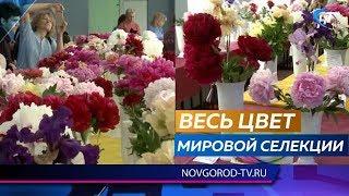 Новгородские селекционеры и цветоводы на традиционной выставке представили почти 200 сортов пионов