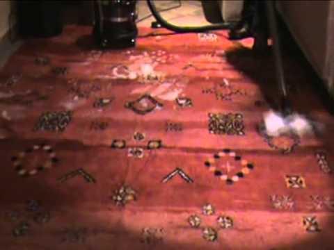 Como limpiar una alfombra limpieza alfombra turca soluc - Como limpiar una alfombra en seco ...