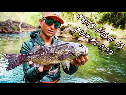This River Has PURPLE SMALLMOUTH In It??? Crazy Hawaiian Fishing!!