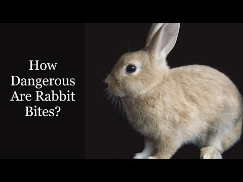 How Dangerous Are Rabbit Bites?