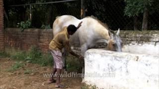 Horse getting a hand massage from his caretaker
