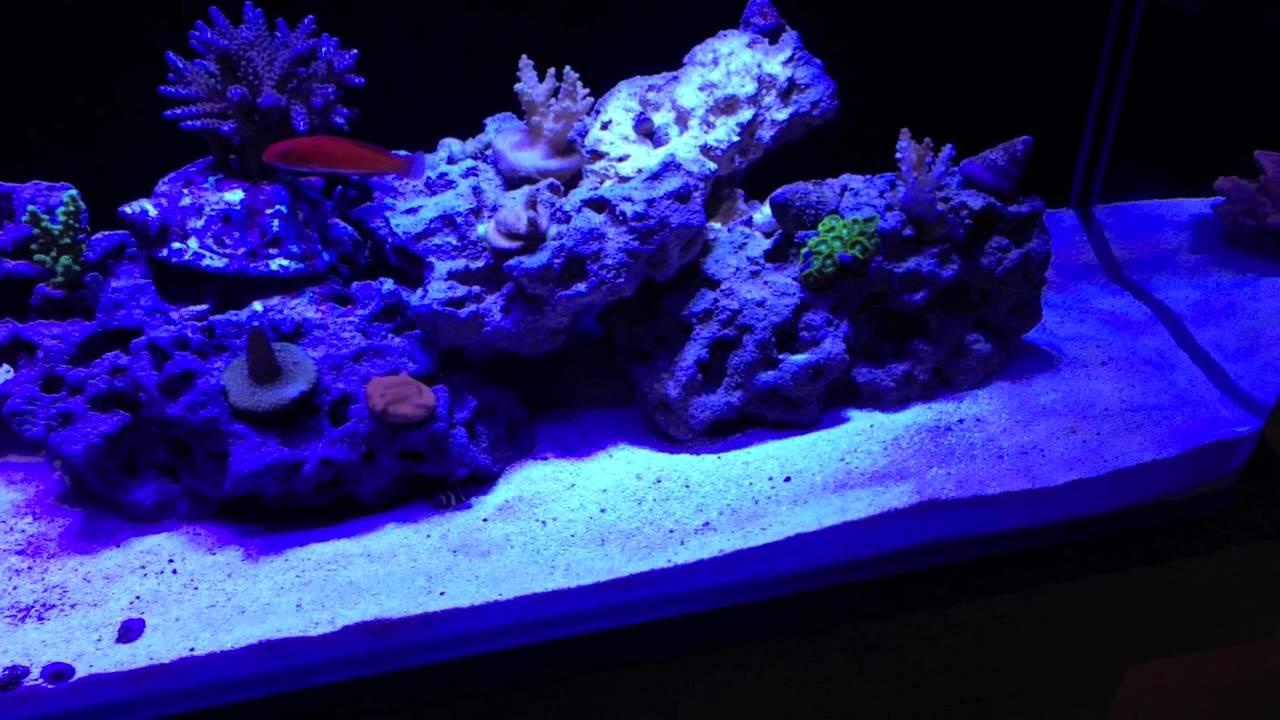 New Cad Lights 34g Mini-ii Reef Setup