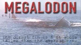 【超危険怪物】超巨大鮫・メガロドンの絶滅は0%ではない?目撃情報あり!