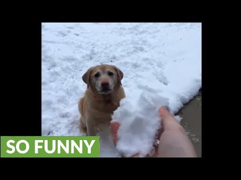Scotty Page - Watch This: Dog Can't Figure Out What Happened To Snowball