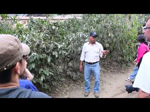 Filadelfia Coffee Tour in Antigua, Guatemala