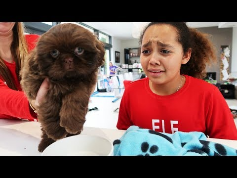 tiana-cried!!-christmas-puppy-surprise