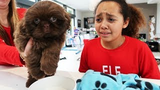 Download TIANA CRIED!! CHRISTMAS PUPPY SURPRISE Mp3 and Videos