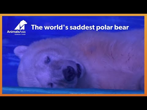 A polar bear is being kept in a Chinese mall for selfies