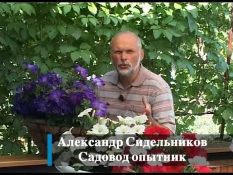 видео: Вертикальное озеленение