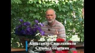 Вертикальное озеленение(Это модное веяние - вертикальное озеленение - дошло и до наших садов. Как сделать красивые вертикальные..., 2012-08-27T19:04:34.000Z)