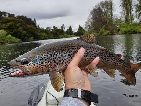 Upper Derwent River Wild  Trout
