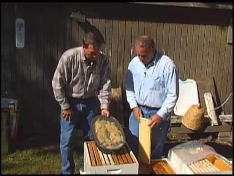 Illinois Stories | Beekeepers