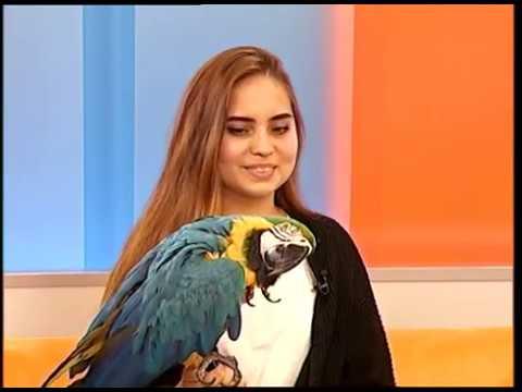 Попугай Ара. Как научить говорить синекрылого попугая ара.