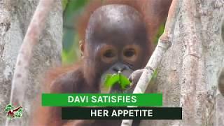 Davi Satisfies Her Appetite