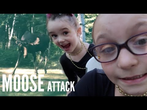 MOOSE ATTACK AT PARTY | CAUGHT ON CAMERA| Somers In Alaska Vlogs
