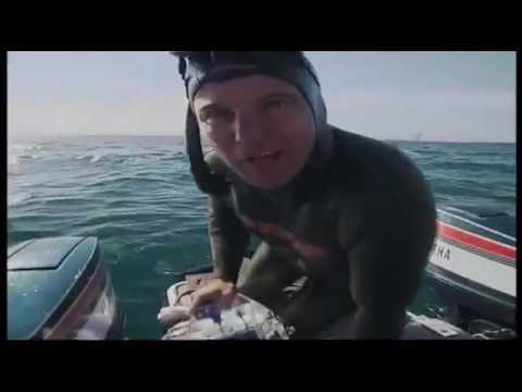 Freediving with the biggest sharks in the world Great white shark and Tiger Shark Document