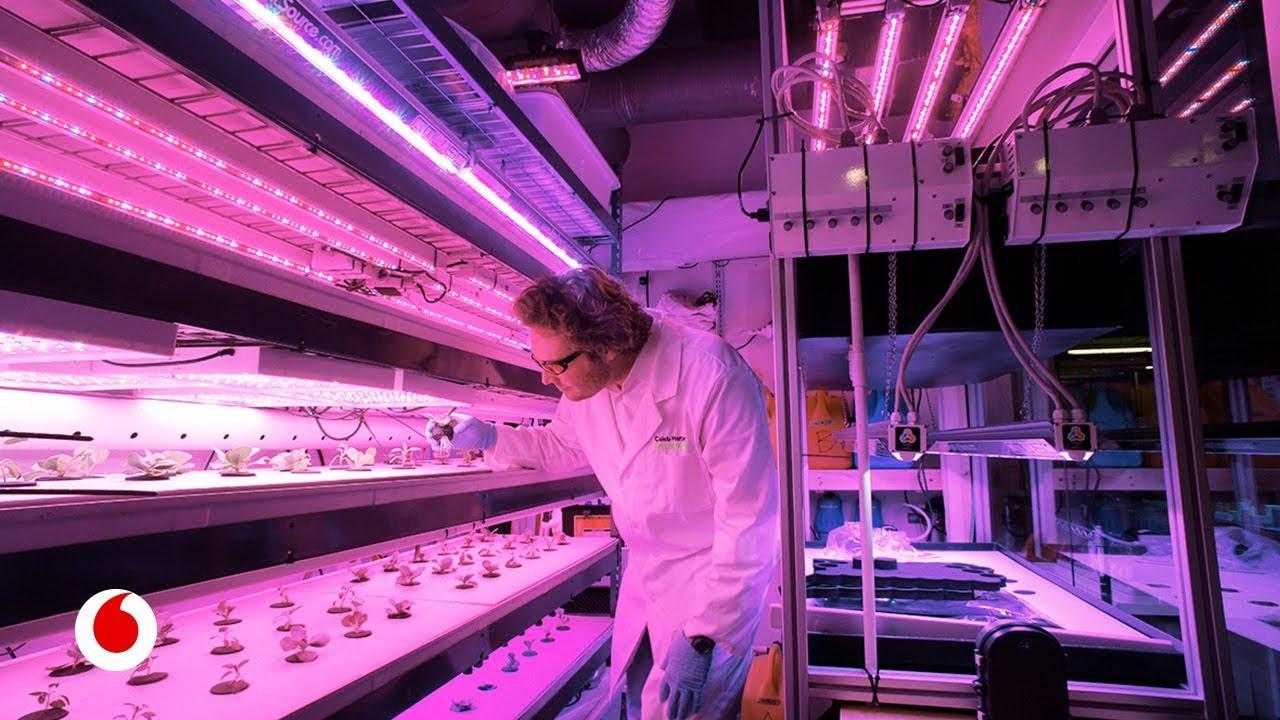 Agricultura digital: el futuro de la alimentación pasará por cultivar en casa