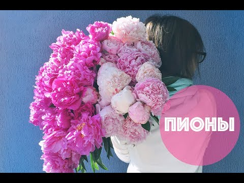ПИОНЫ 🌸 PEONY: Энциклопедия цветов  🌿🌺🌿