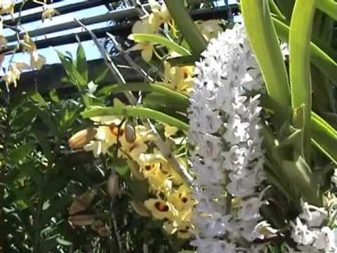ศาสตราจารย์ ระพี เดินทางดูกล้วยไม้ไทยหายาก ที่ปัตตานี ข่าวภาคใต้