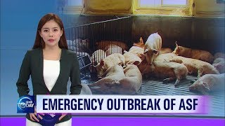 Outbreak of ASF [KBS WORLD News Today / ENG]
