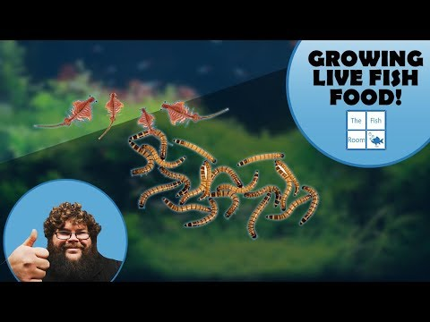 How To GROW Your Own LIVE Aquarium Food!
