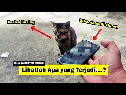 Kucing Dibacakan Al Quran Lihatlah Apa Yang Terjadi