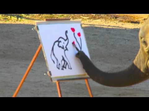 Elephants painting pictures and playing soccer