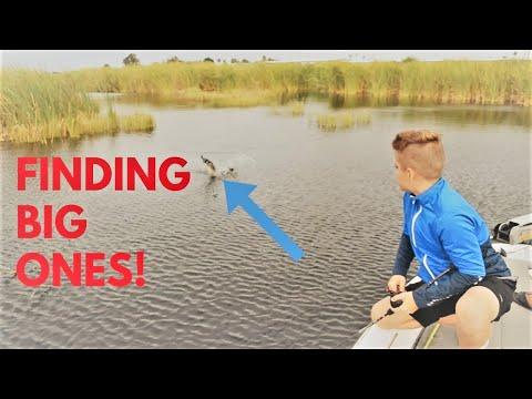 Lake Okeechobee Bass Fishing (TOURNAMENT PRACTICE!)