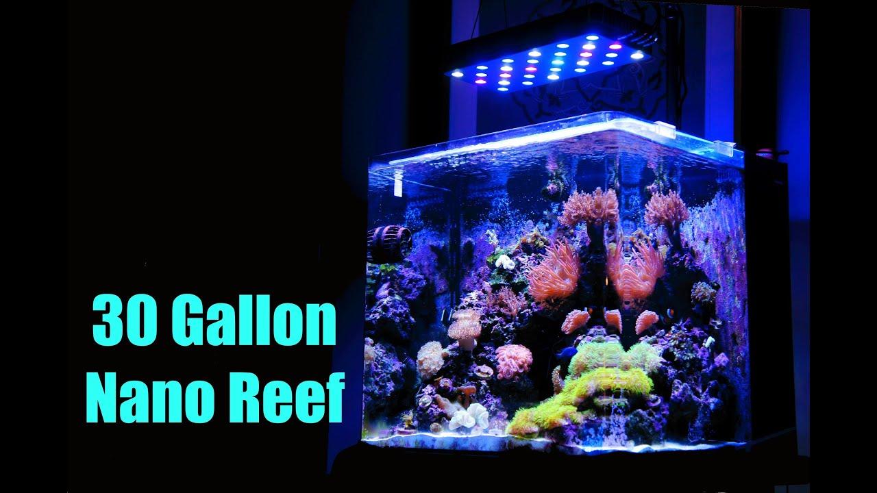 30 Gallon Nano Reef Brilliant Aquarium Hd Youtube
